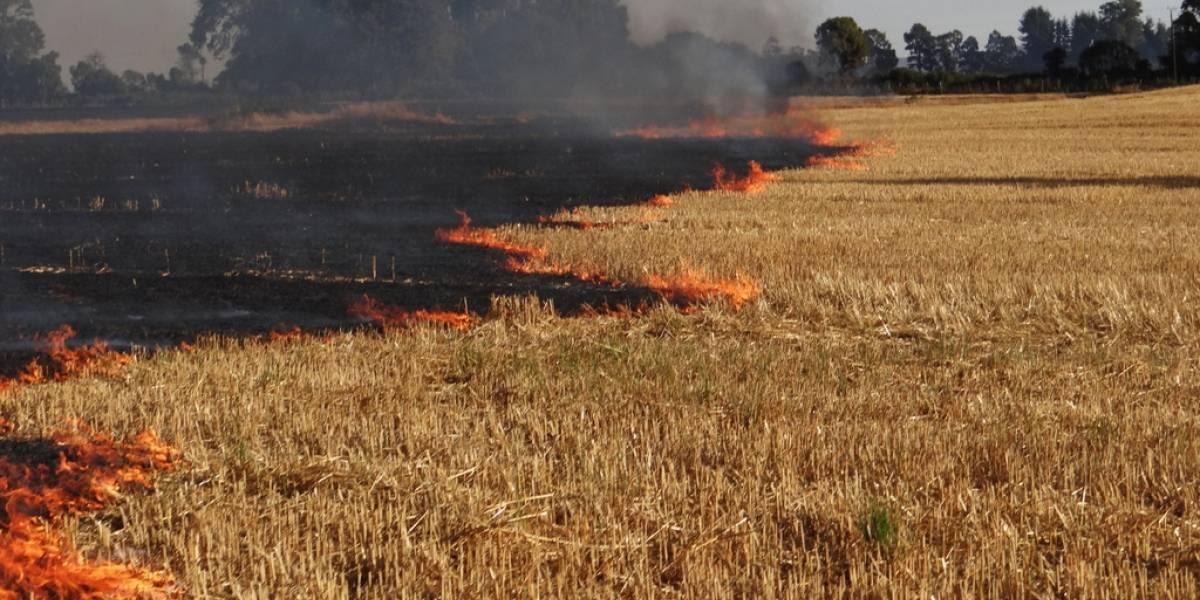 CONAF reitera prohibición de efectuar quemas agrícolas luego de 20 incendios entre Biobío y La Araucanía el fin de semana