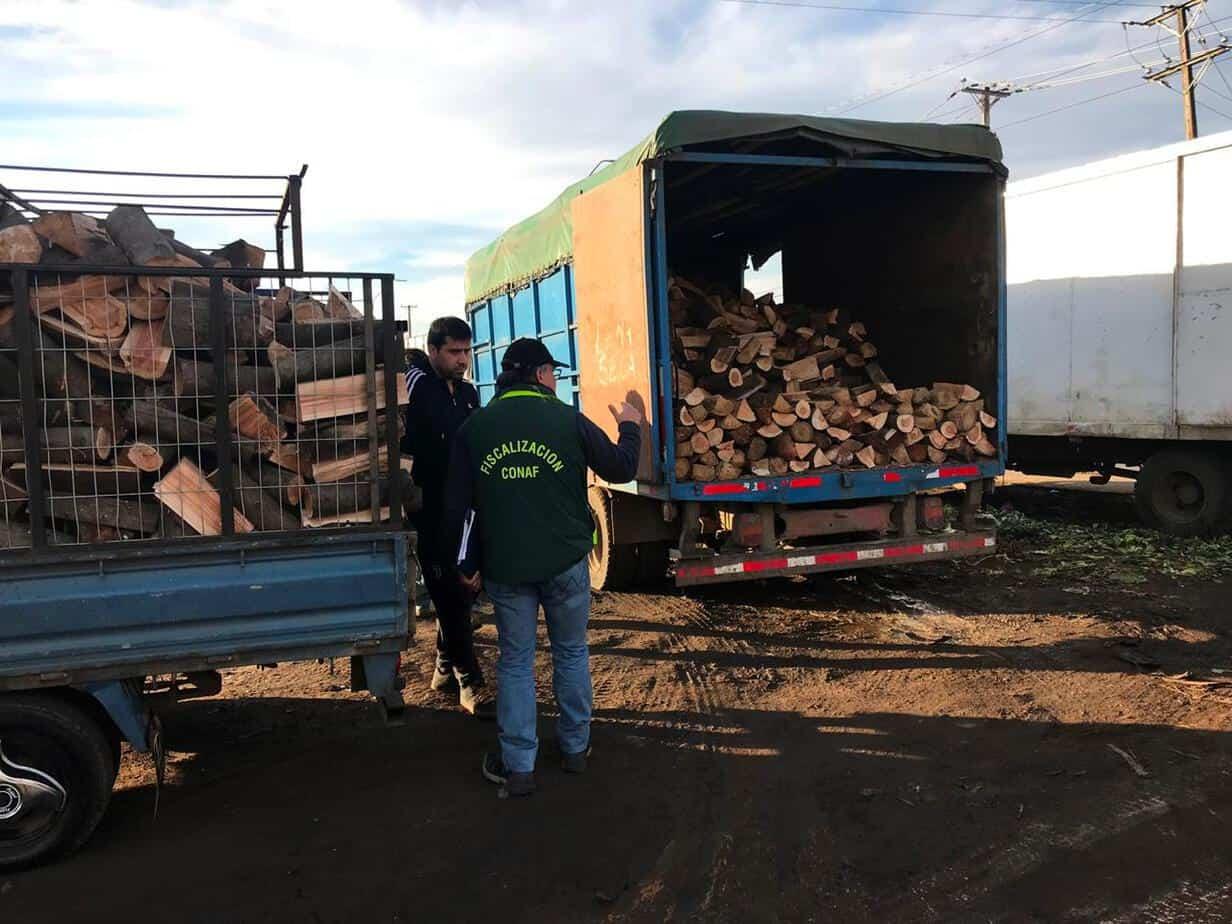 Conaf intensifica fiscalización al transporte y acopio de leña nativa en la provincia de Biobío
