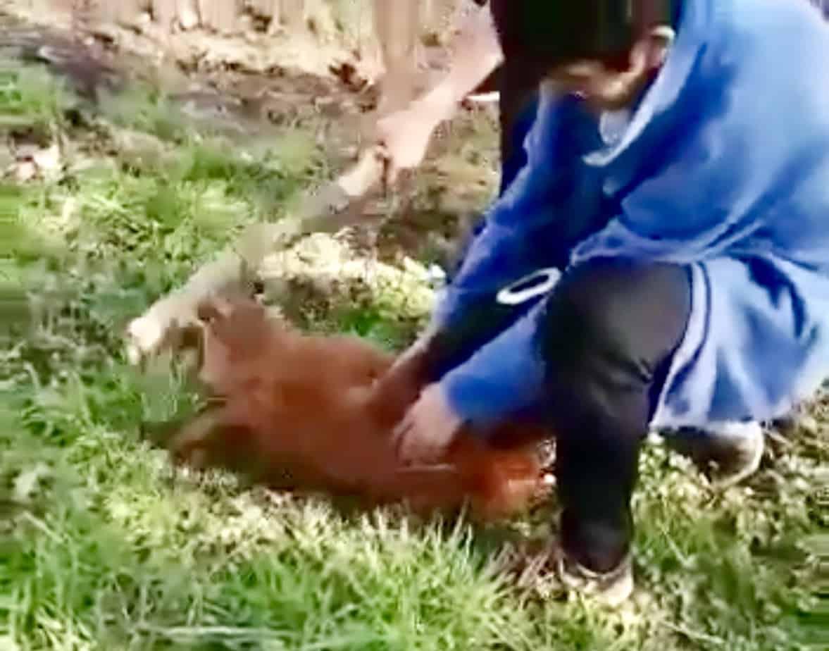 Brutal maltrato animal por parte alumnos de Liceo CAS de Santa Bárbara se viraliza en la web