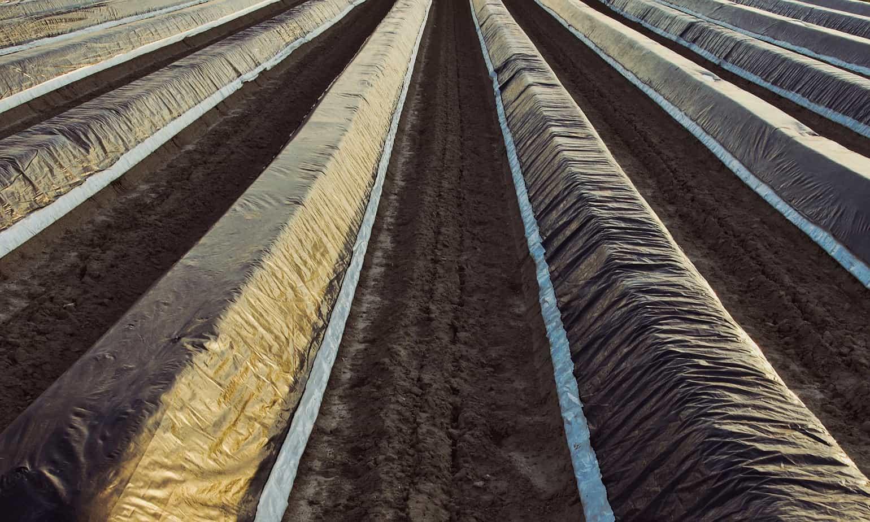XVI Congreso Internacional de Plasticultura abordará soluciones a escasez hídrica y demanda agroalimentaria