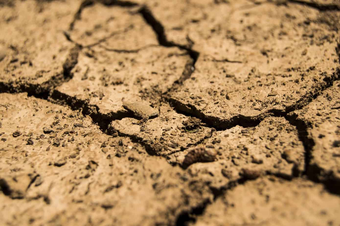 Expertos analizarán efectos del cambio climático en la agricultura de la Región del Biobío