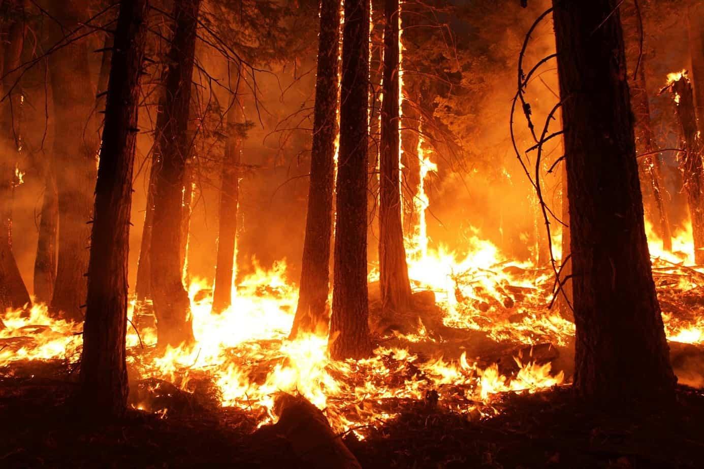 Autoridades llaman a prevenir los incendios forestales en Año Nuevo