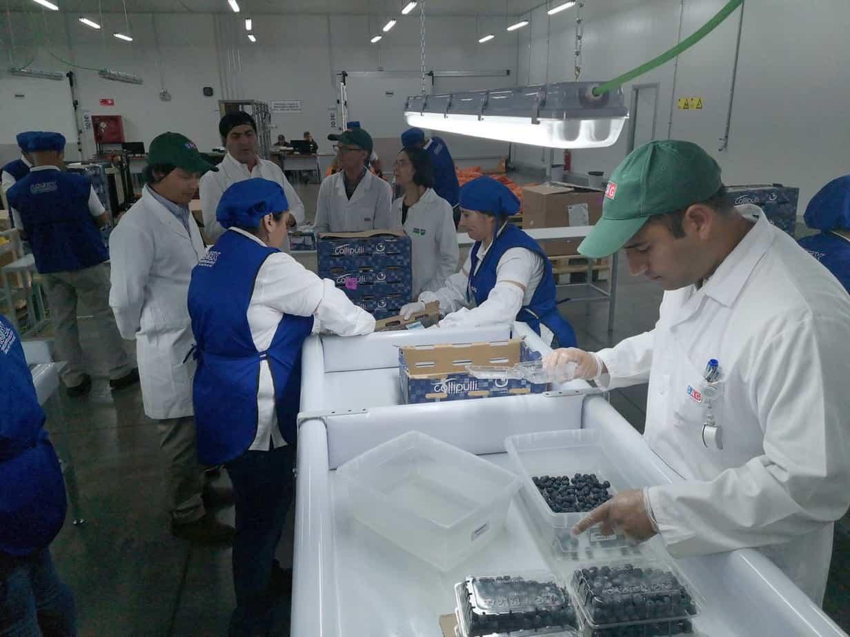 Inician temporada de inspección de fruta fresca en Cabrero