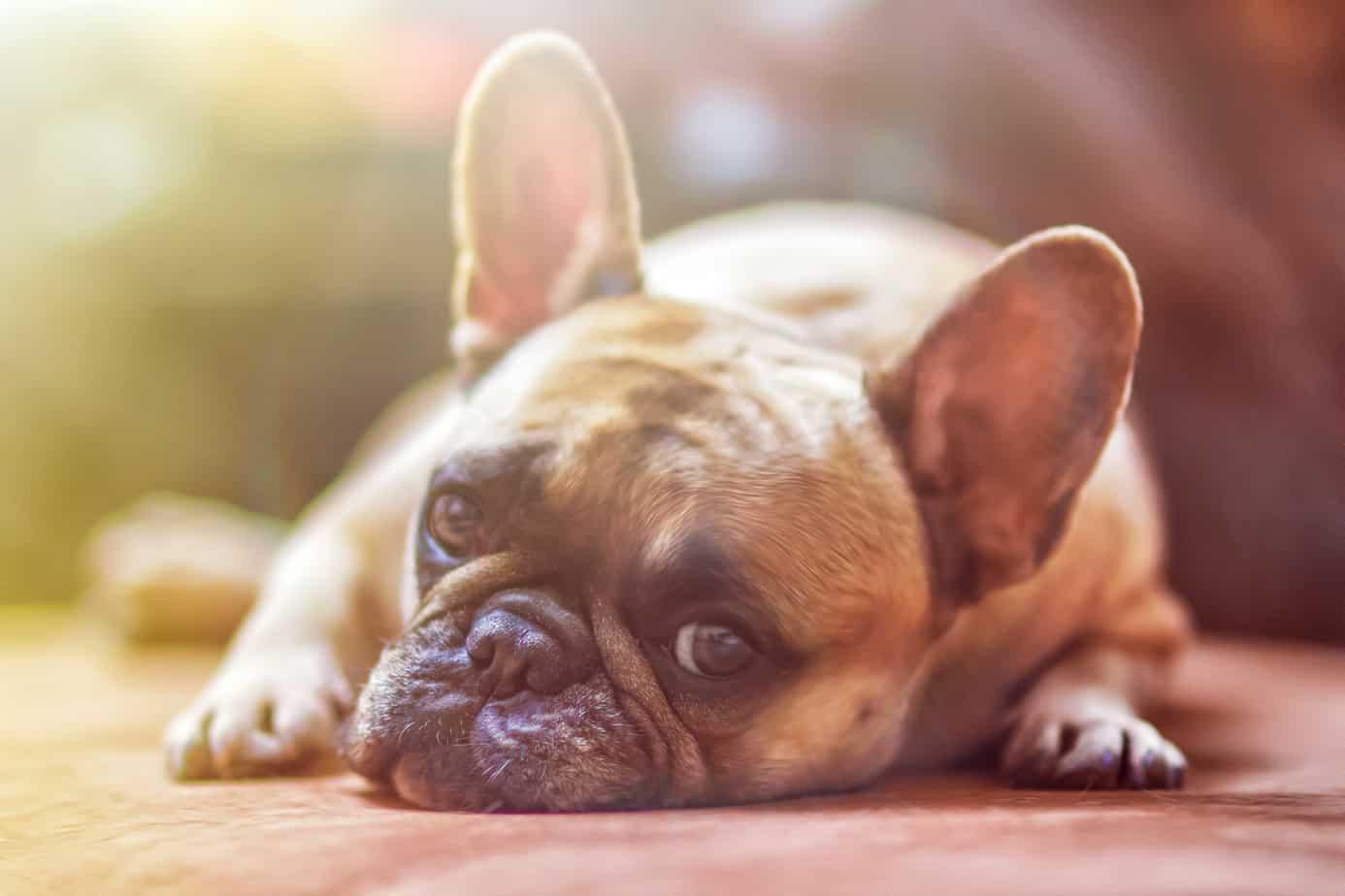 Altas temperaturas en la provincia: ¿Cómo afecta a nuestras mascotas y qué debemos hacer?