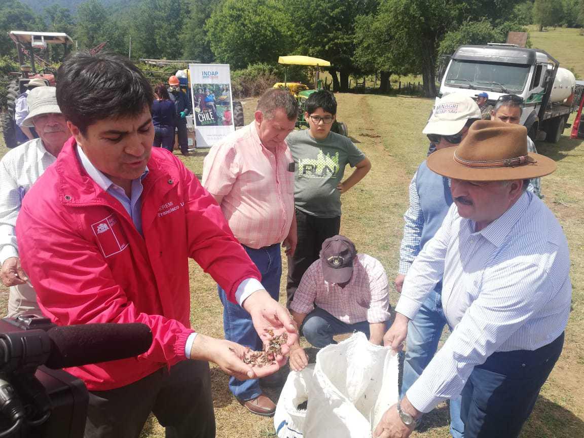 Indap comenzó plan de mitigación y control a plaga de langostas en Quilaco