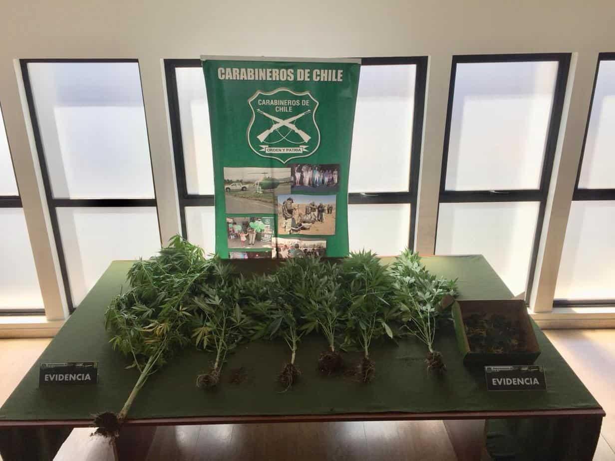 Mulchenino es detenido por tener un indoor de Marihuana