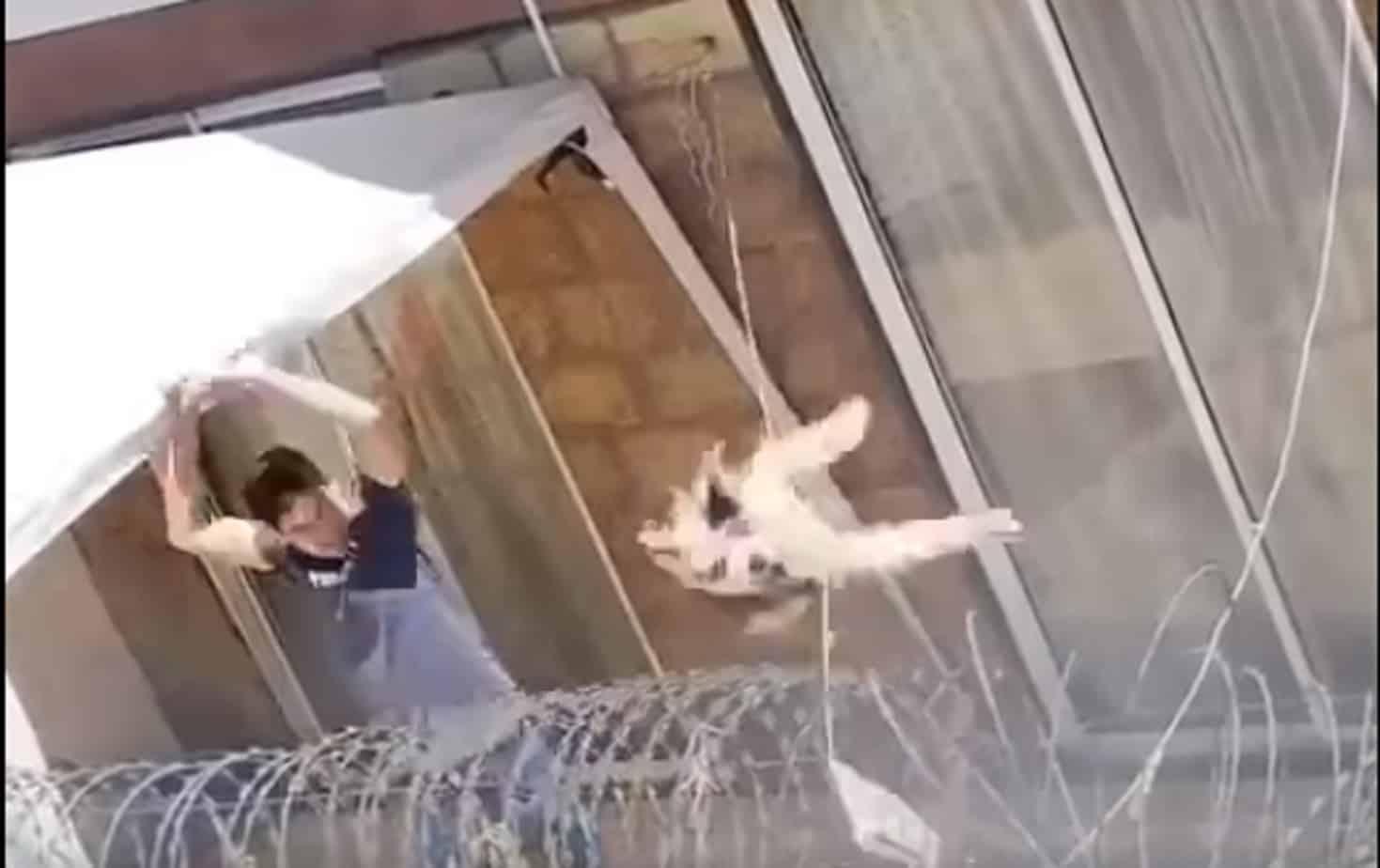 Brutal maltrato animal se hace viral