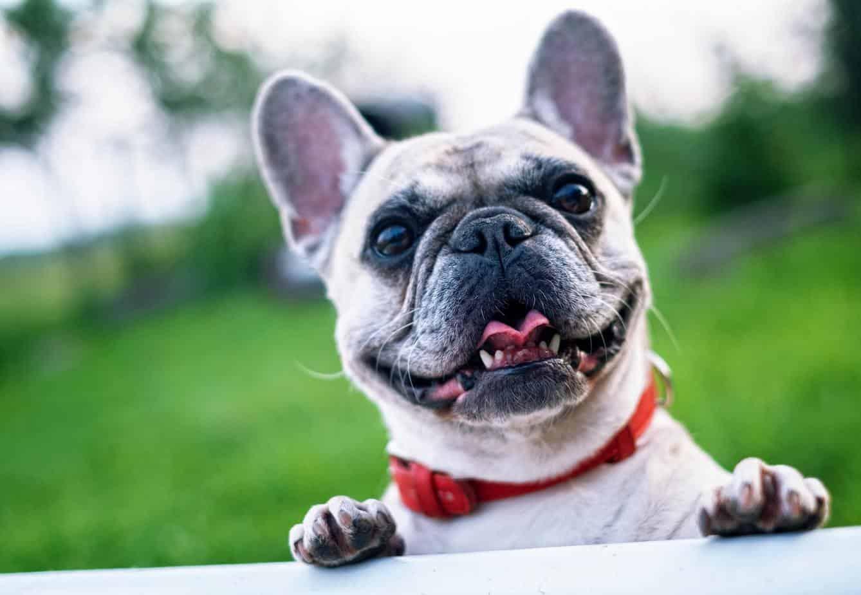 Covid, Pandemia y Virus: los nombres más curiosos de las mascotas chilenas este 2020