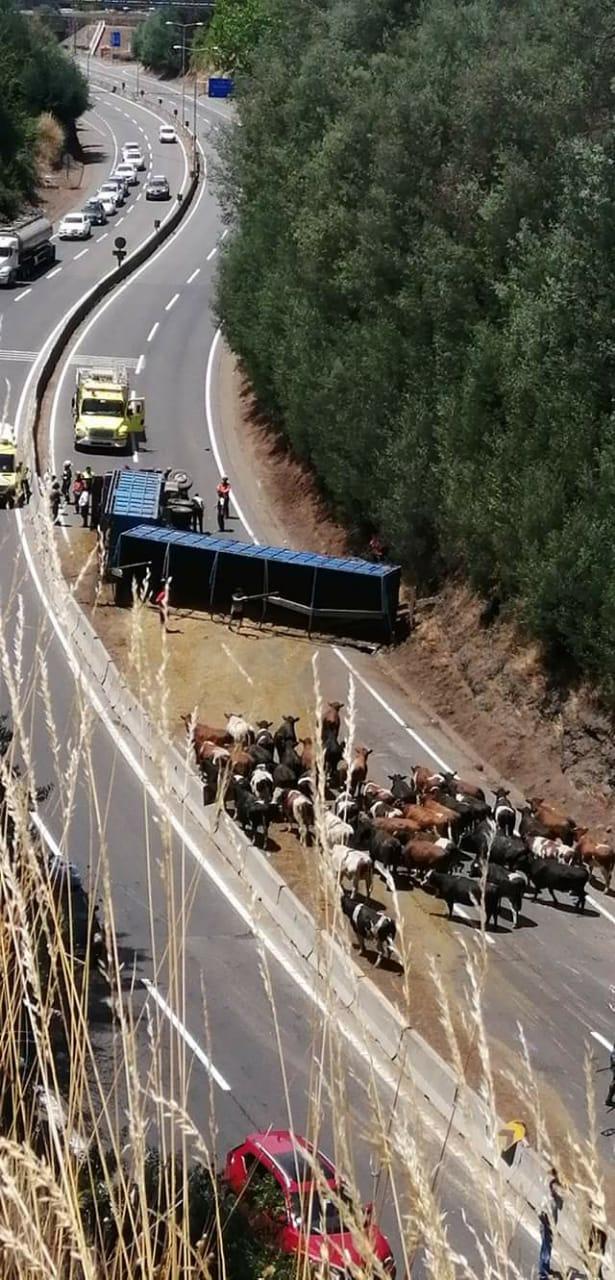 Taco de 2km: Camión vuelca en ruta 5 a la altura del Puente Malleco