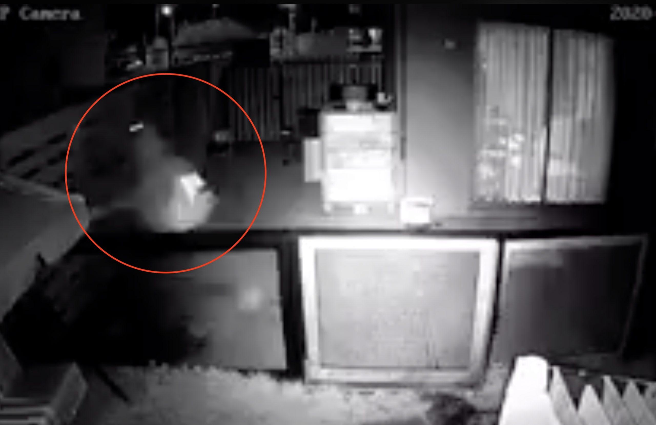 Momentos de terror vivió la presidenta regional de Evopoli con delincuente dentro de su casa: «Dijo que me iba a matar»