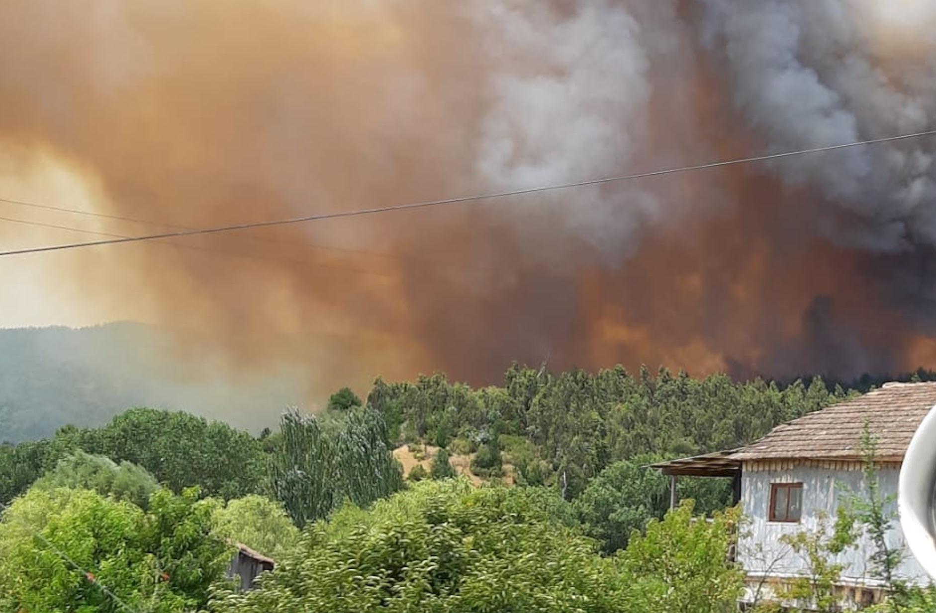 Incendio en Nacimiento: Más de 40 hectáreas e inician evacuación de viviendas