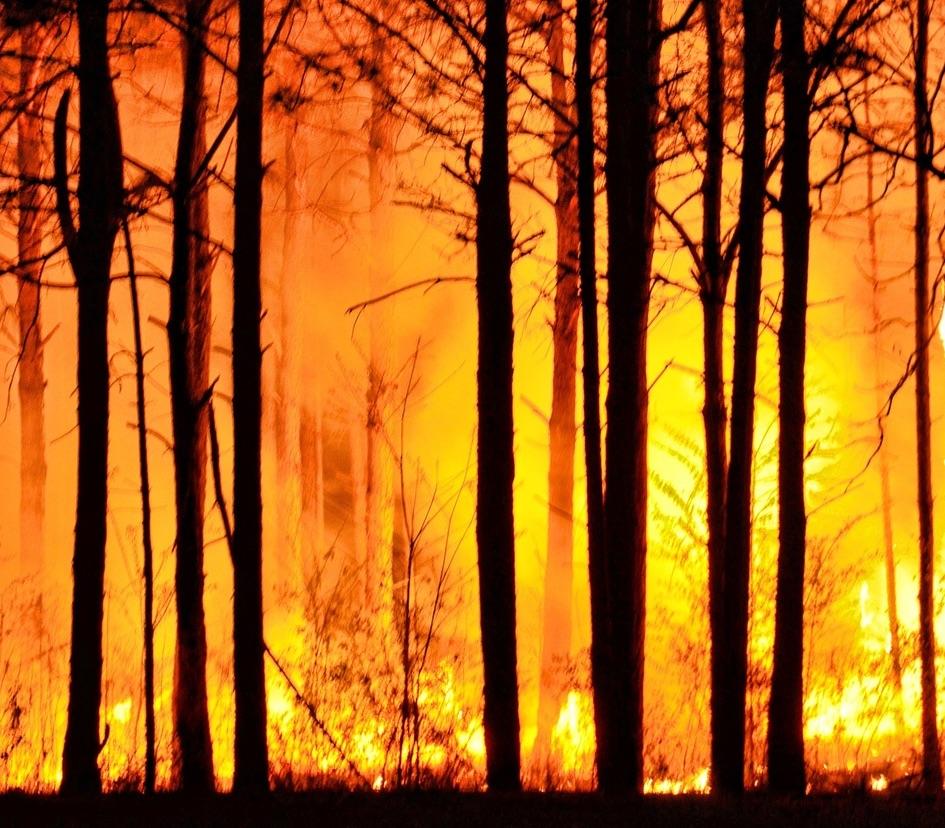 Declaran alerta roja en Los Ángeles por incendio forestal