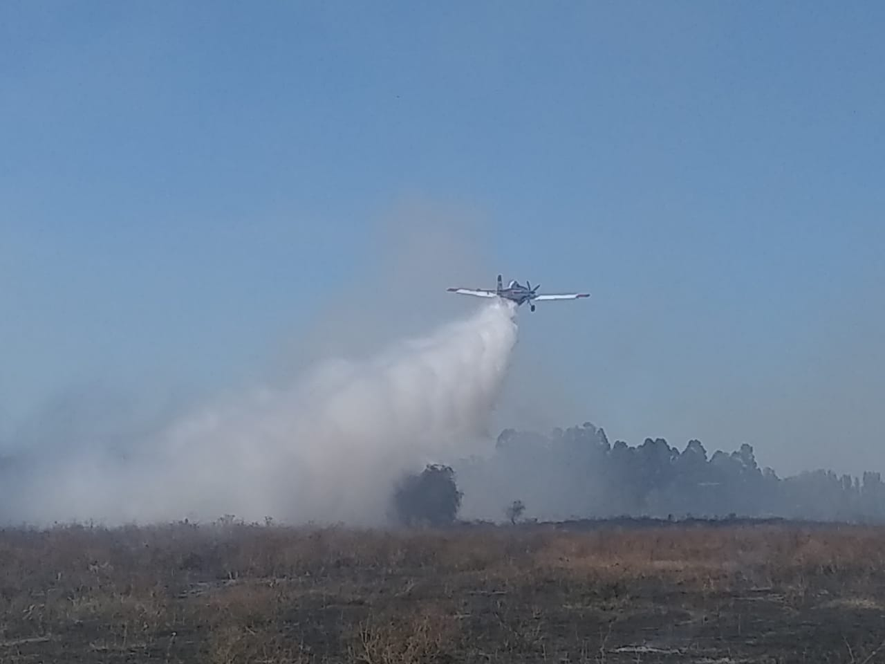 Incendio forestal destruye cuatro hectáreas en Pata de Gallina