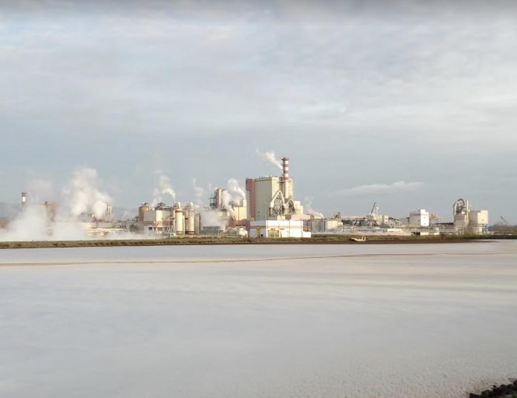 Minsal prohibe funcionamiento a planta Celulosa Arauco tras caso confirmado de Covid-19