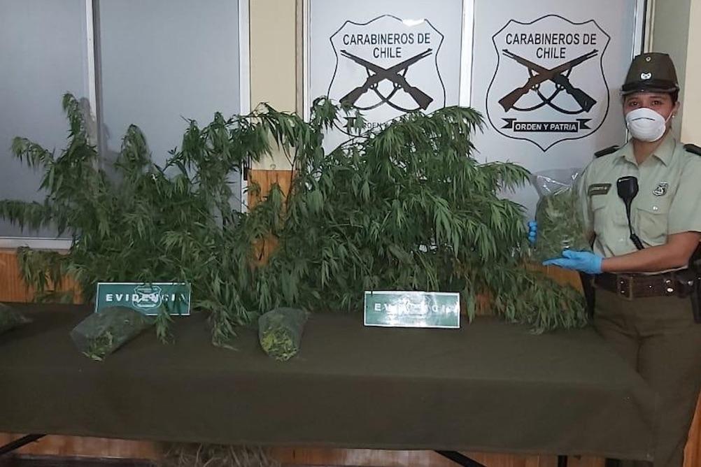 Mujer es detenida por tener 28 plantas de marihuana en su patio en Canteras