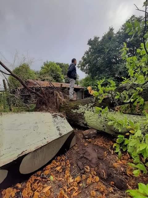 Fuertes vientos dejan destrozos en sector El Manzanal en Renaico
