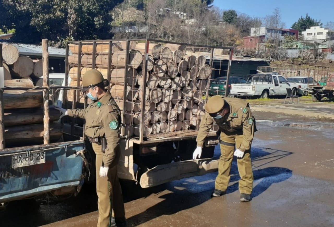 Mulchén: cuatro detenidos por robo de madera