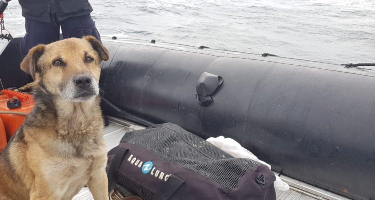 Murió «Calamar» el perrito cabo de la Armada sobreviviente de Chaitén