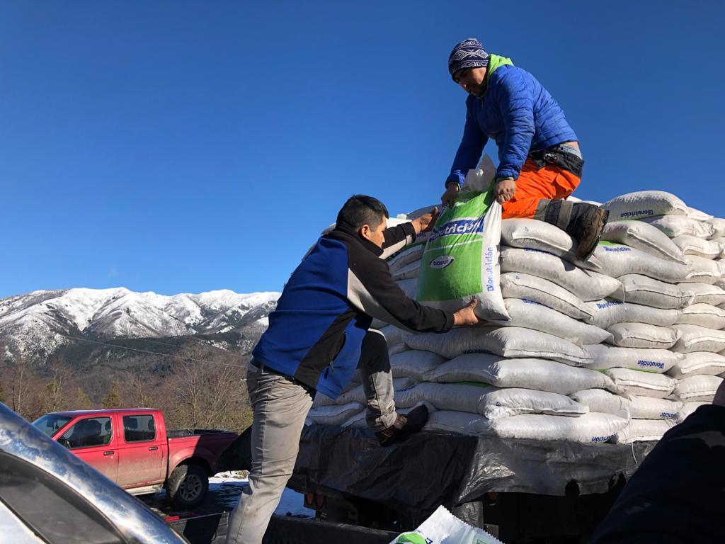 Gobierno confirma entrega de forraje para agricultores de Alto Biobío
