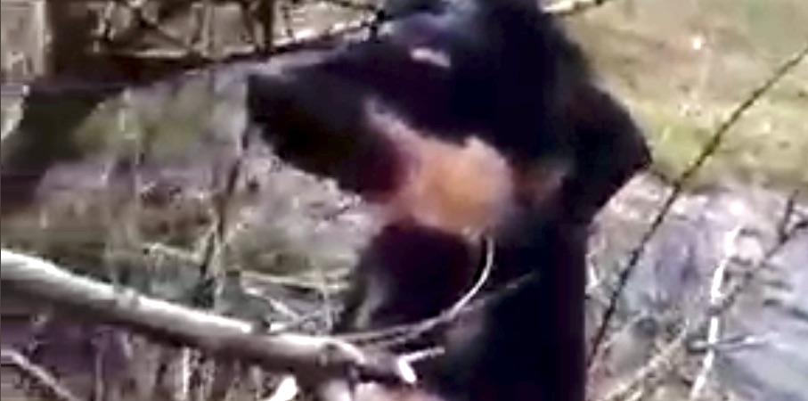 Brutal maltrato animal en San Rosendo: Encuentran perro colgado de un árbol