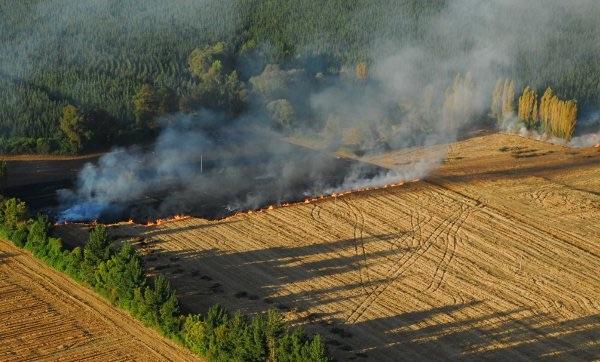 Prohiben quemas agrícolas y forestales en Los Ángeles hasta nuevo aviso