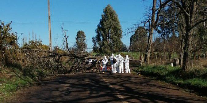 Motociclista muere tras impactar con árbol derribado en La Araucanía