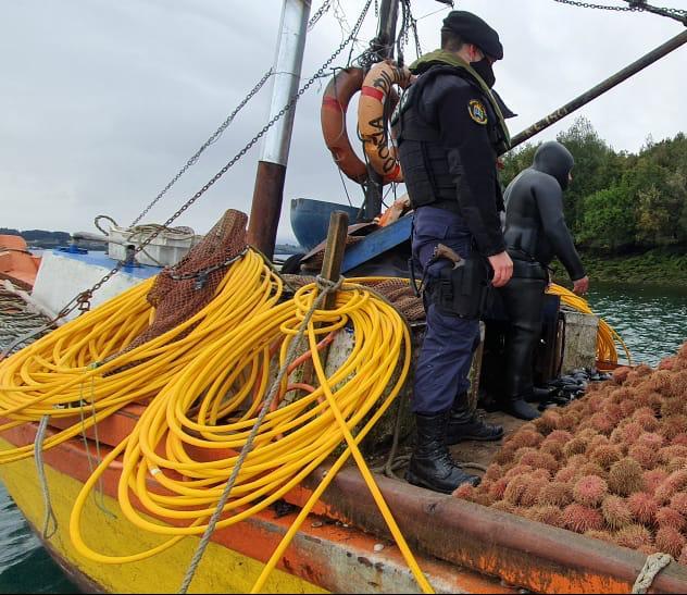 Policía Maritima incauta 157 kilos de erizos en provincia de Chiloé: Están en veda
