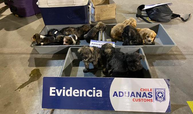 Deportan a once cachorros que ingresaron al país escondidos en un camión