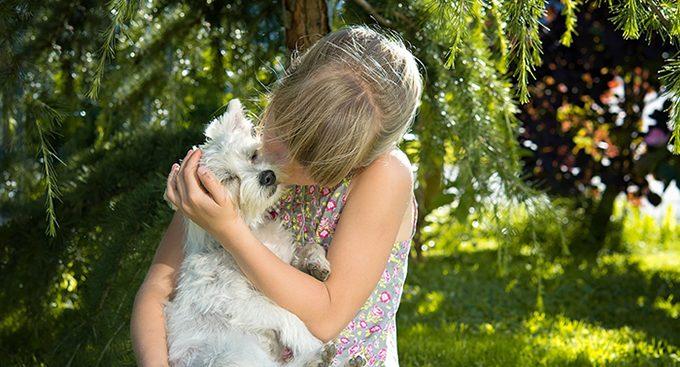 Clínica veterinaria que retuvo a un perro por deudas deberá devolverlo a su dueña