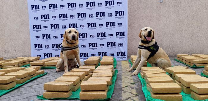 Gracias a Gary y Goliath: PDI logró histórico decomiso de marihuana en Coquimbo