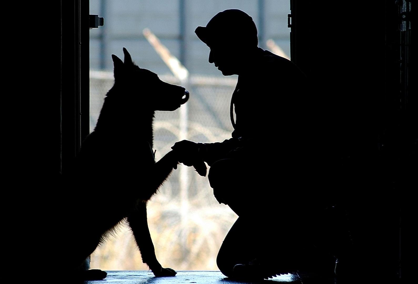 Prohiben perros en Corea del Norte y todos serán sacrificados