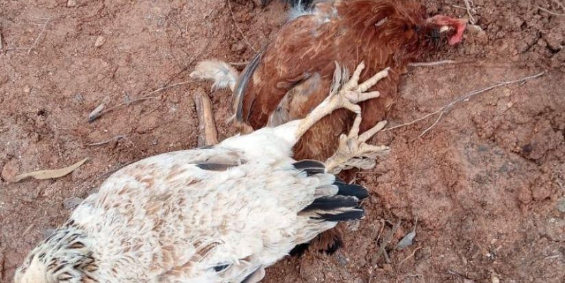 Preocupación por misteriosa mortandad de animales en Santa Juana