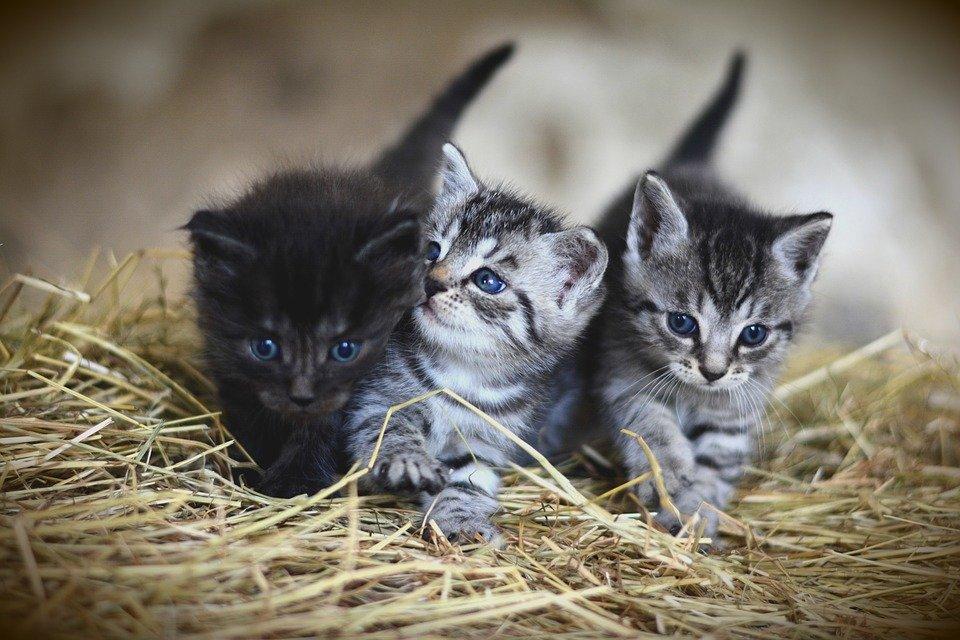 Fiscalía investiga brutal maltrato a gatitos subido a redes sociales