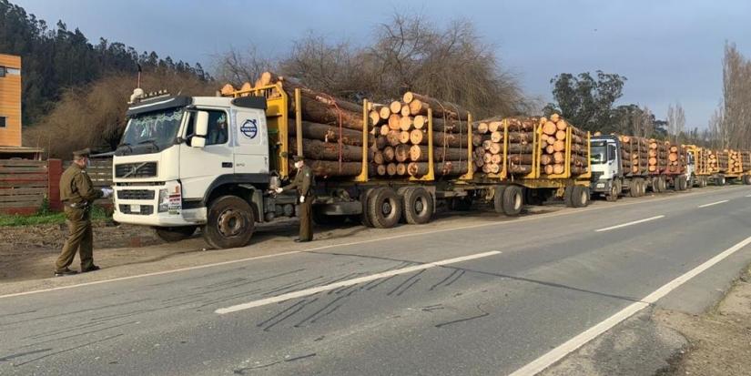 Incautan 6 camiones madereros con guías falsas en provincia de Arauco