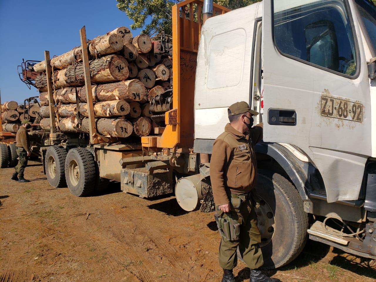 Carabineros detienen a camionero que transportaba madera robada en Contulmo