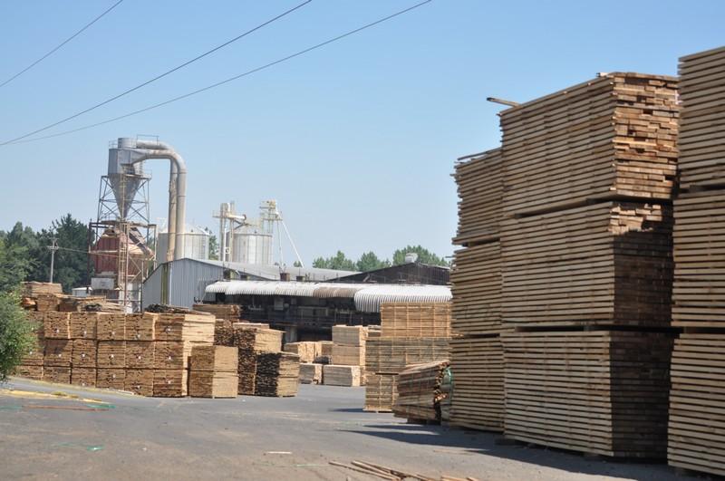 Planta maderera de Los Ángeles aclara su situación tras brote de Covid-19 entre sus trabajadores