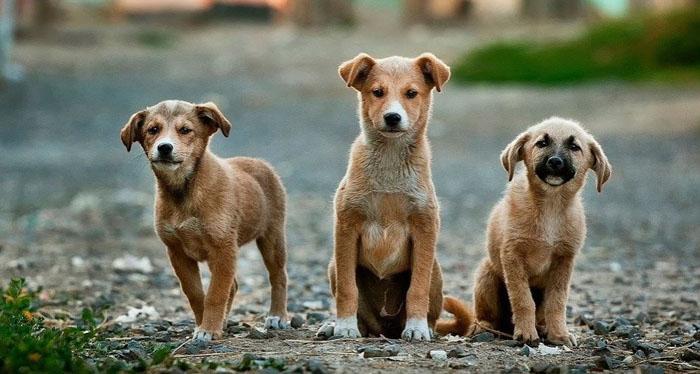 Nuevo caso de extrema crueldad: encuentran a tres perritas ahorcadas en Cabildo