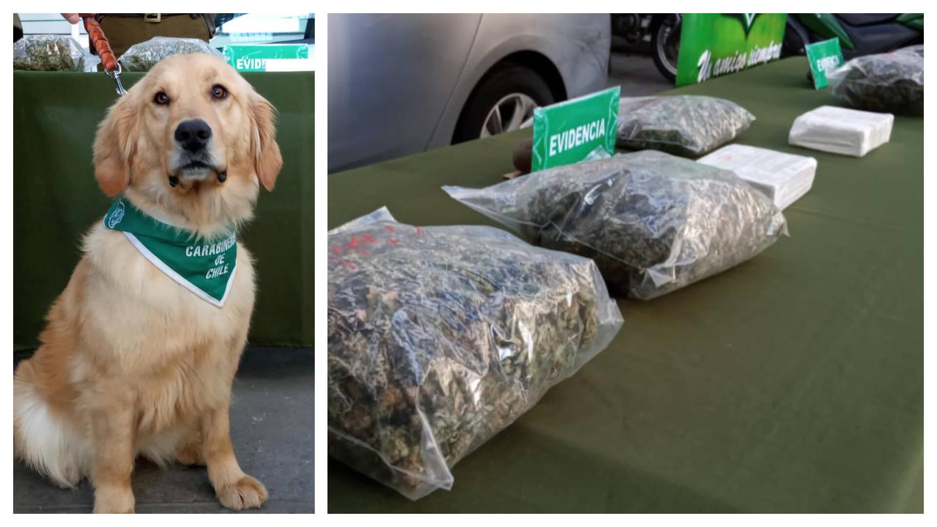Los Ángeles: Perrito detecta a sujetos con 40 millones en cocaína y marihuana