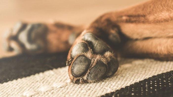 Perro recién adoptado fue abatido a balazos tras atacar y dejar con lesiones a tres personas