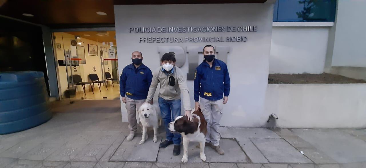 Los Ángeles: PDI recupera a dos perros que fueron robados a su dueño