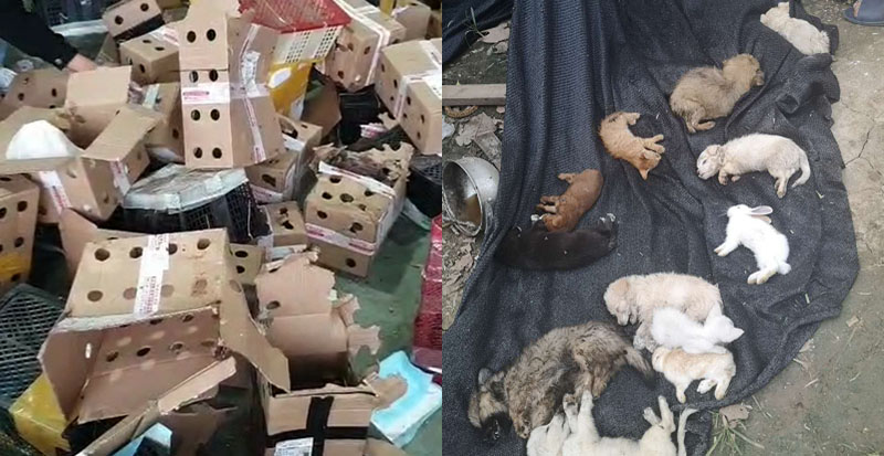 Horror en China: encuentran a 5 mil mascotas muertas dentro de cajas de encomienda