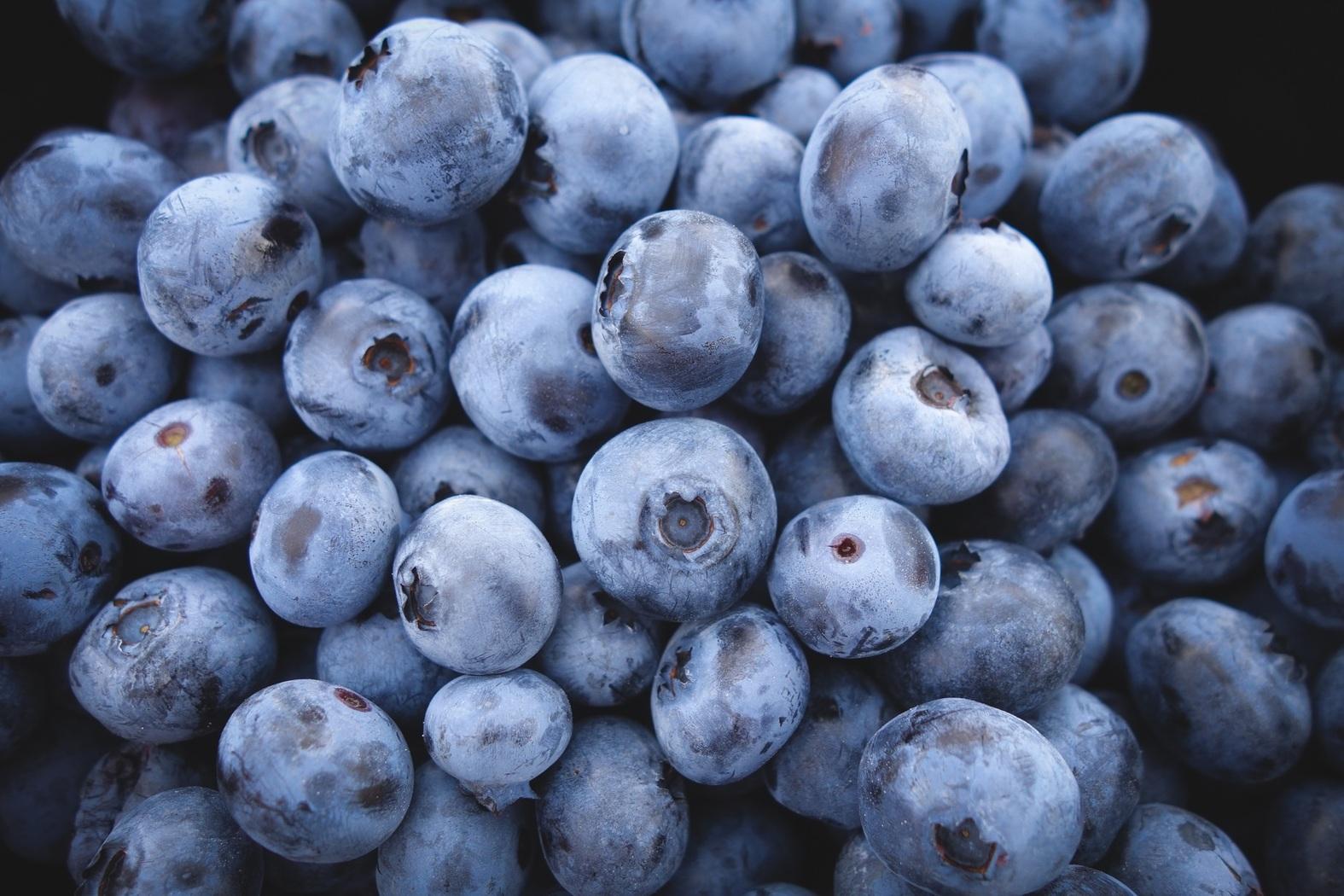 Productores de berries se preparan para su primera cosecha en medio del Covid