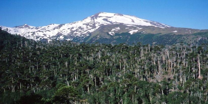 Sigue Alerta Amarilla en Alto Biobío por actividad del Volcán Copahue