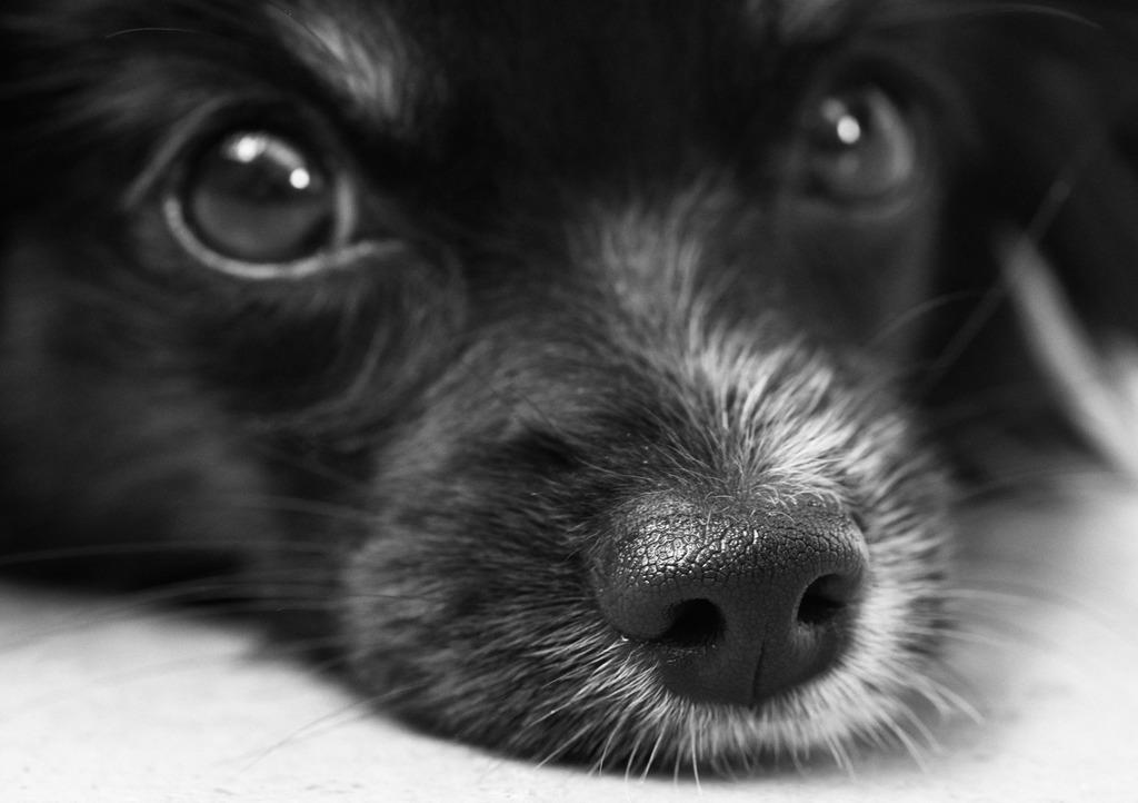 Huellitas en el Cielo: ¿Cremarías a tu mascota cuando tenga que partir?