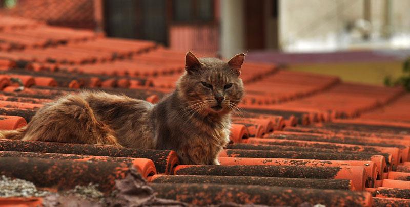 Crueldad: encuentran gato decapitado en Chiloé