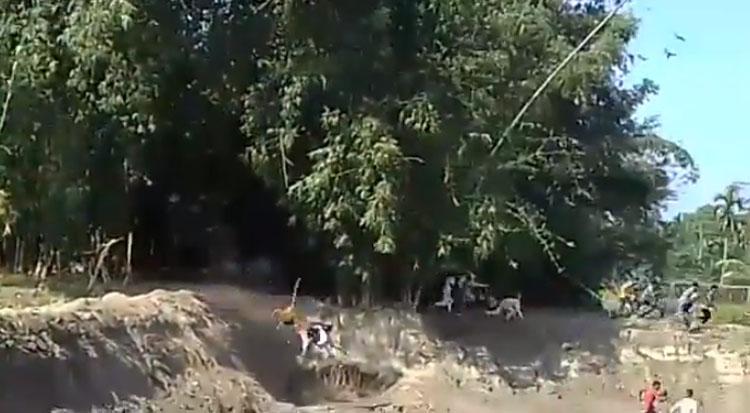 Tigre de Bengala irrumpió en una aldea de India y atacó a dos personas