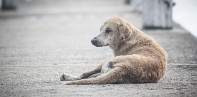 Sujeto murió por un disparo en la espalda tras defender a un perro callejero