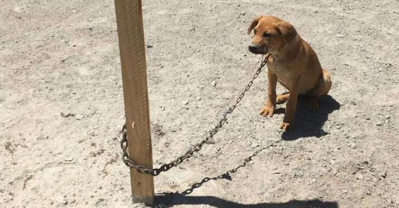 Amarrados, sin agua ni comida: denuncian cruel maltrato contra dos perros