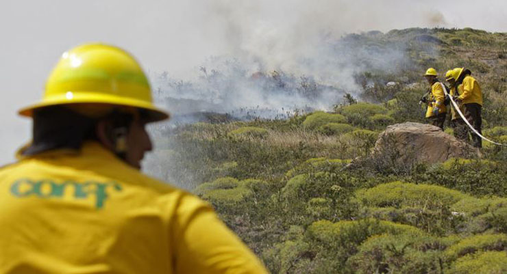 Incendio forestal en Guayalí está controlado: 29 hectáreas fueron afectadas