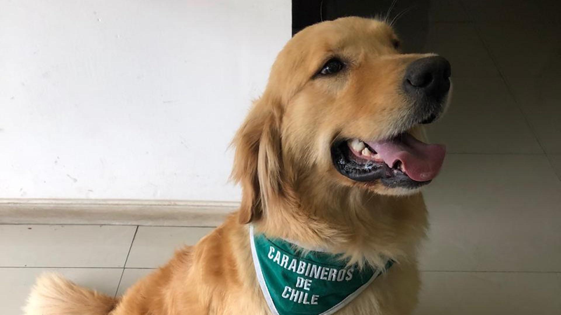 Los Ángeles: Foly, el can del OS7 saca de circulación más de 5 millones en pasta base